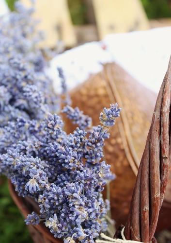 Lavender---Levendula